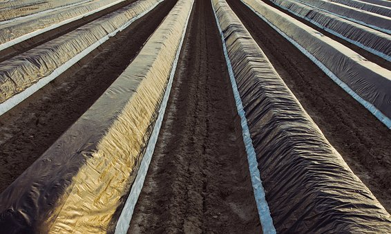 Asparagus Hills, Slide, Agriculture, Wrinkled, Abstract