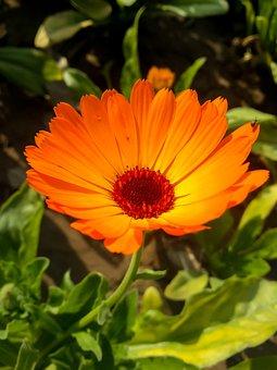 Flowers, Nature, Blossom, Summer, Spring, Garden, Flora