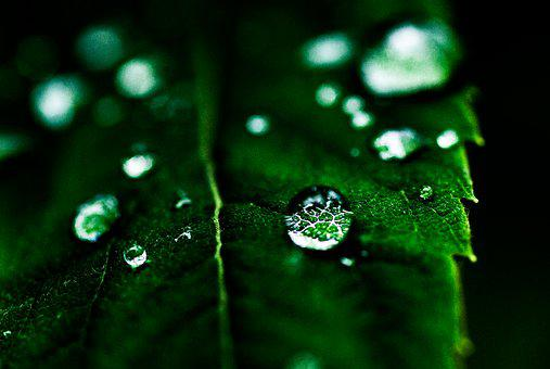 Leaf, Drop, Green, Macro, Nature, Leaves, Plants, Water