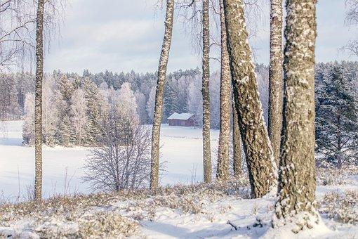 Winter, Winter Landscape, Nature, Snow, Cold, Landscape