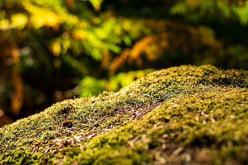 Thicket, Landscape, Summer, Autumn, Grass, Yellow, Hell