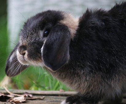 Rabbit, Bunny, Garden, Cute, Animal, Little, Young