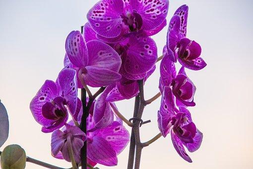 Blossom, Bloom, Nature, Petals, Spring, Close Up