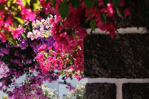Summer, Flowers, Garden, In The Summer Of, Bloom