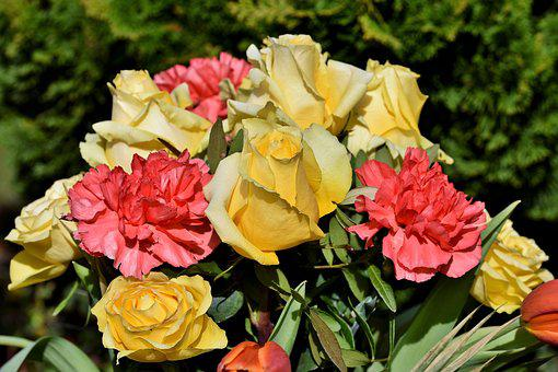 Rose, Carnation, Bouquet Of Roses, Rose Bloom, Bouquet