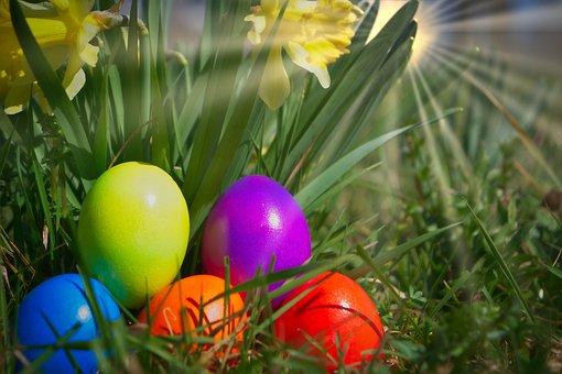 Easter, Egg, Yellow Flower, Sun, Backlighting
