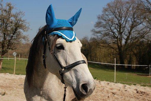 Arabian Horse, Horse, Pastures, Nature, White, Equine