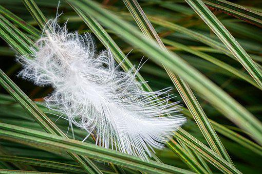 Feather, Grass, Nature, Slightly, White