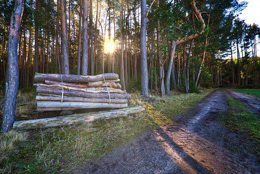 Forest, Away, Wood, Tree Trunks, Nature, Forest Path