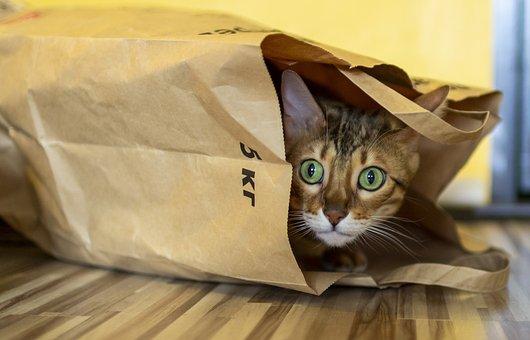 Cat, Package, Bengali, Bengal, Predator, Funny