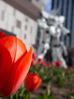 Tulip, Spring, Flowers, Odaiba, Natural, Garden