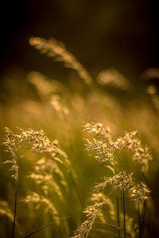 Flowers Field Grass, Grass, Meadow, Flower, Green