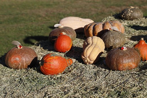 Pumpkins, Pumpkin, Orange, Halloween, October, Colorful