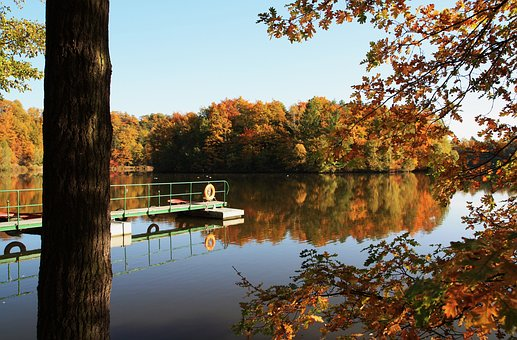 Autumn, Leaves, Lake, Web, Water, Nature, Fall Foliage