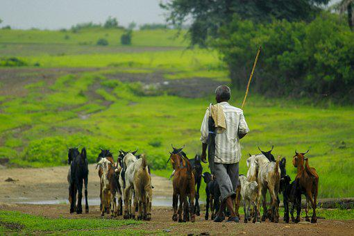 Goat, Man, Animal, Nature, Outside, Together