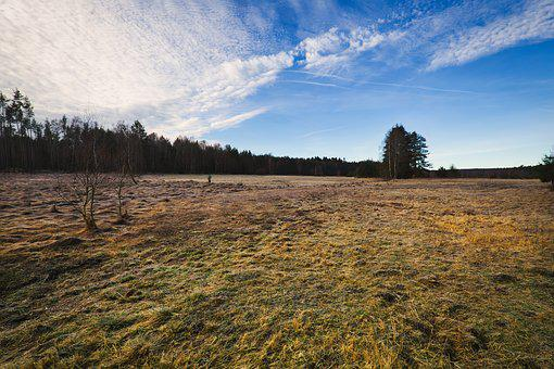 Moor, Landscape, Meadow, Swamp, Nature, Mood