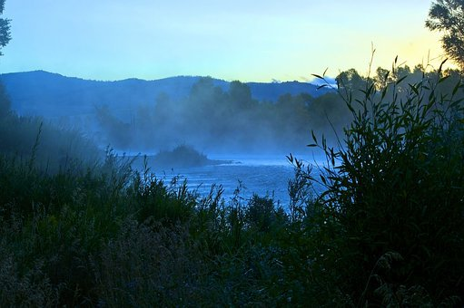 Mist On Gros Ventre, Mist, Morning, Forest, Fog