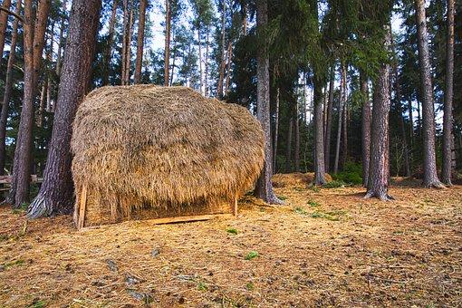 Haystacks, Forest, Food, Parklandschaft