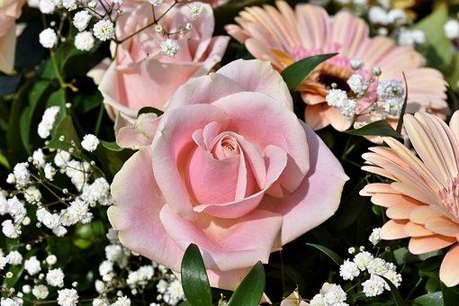 Rose, Rose Bloom, Floribunda, Pink, Blossom, Bloom
