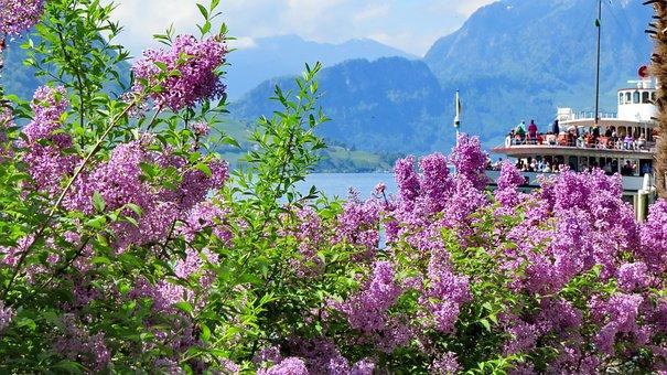 Landscape, Nature, Switzerland, Spring, Weggis, Ship