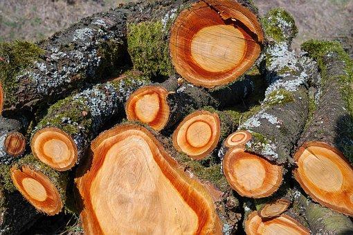 Wood, Holzstapel, Tree Trunks, Timber, Tree Bark
