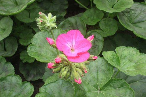 Flower, Day, New Year, Vietnam, End Year
