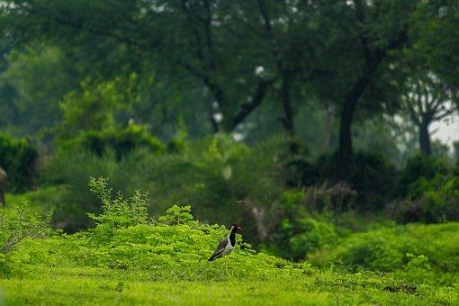 Beautiful Bird, Red Beak, Wild, Wildlife, Bird, Nature