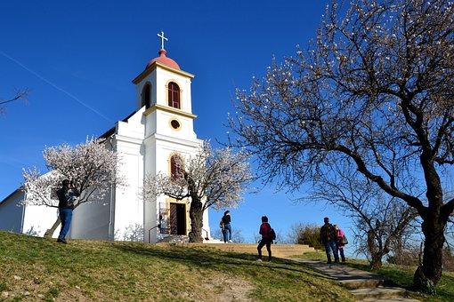 Baranya, Pecs, Church, Havihegy, Spring, Almond