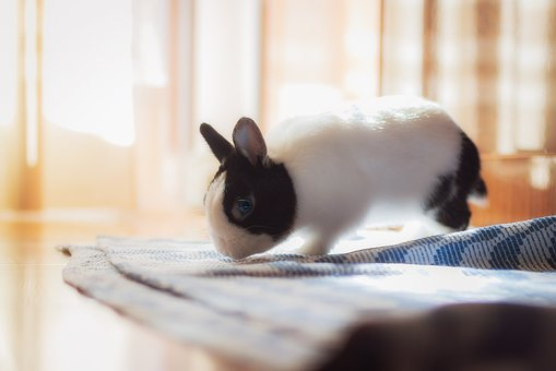 Rabbit, Toy, Small, Pet, House, Domestic
