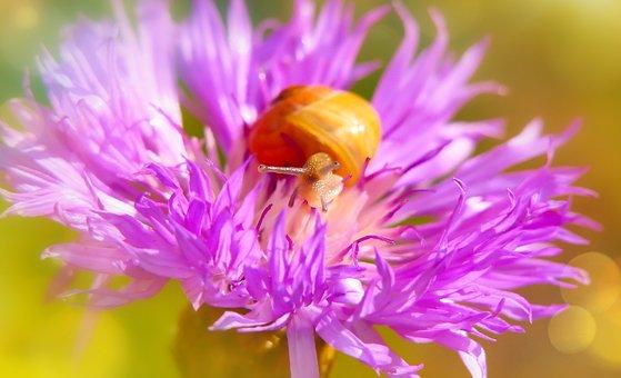 Zaroślarka Total, Molluscum, Flower, Spring, Animals