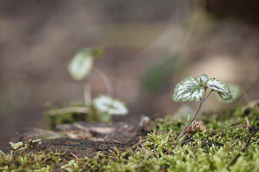 Plant, Small, Moss, Forest Floor, Green, Spring, Macro