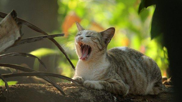 Kerala, India, Cat, Animal, Cute, Nature, Portrait, Pet