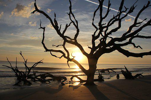 Beach, Sunrise, Nature, Coast, Driftwood, Tree