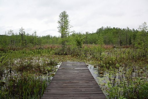 Nature, Swamp, Peaceful, Path, Outdoors, Now What