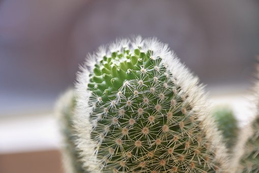 Cactus, Thorns, Plant, Green, Thorny