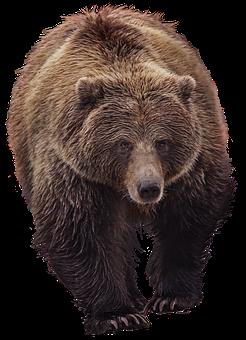 Bear, Grizzly, Animal World, Predator, Furry, Brown