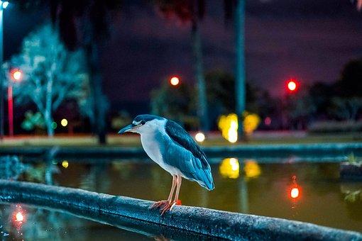 Savacu, Square Crystals, Brasilia, Brazil, Df, Birds