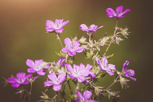 Flowers, Wildflowers, Pink, Purple, Summer, Nature