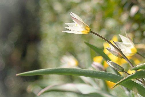 Spring, Sun, Light, Green, Grass, Sunshine, Sunny