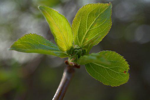 Spring, Green, Leaf, Bud, Tree, Branch, Fresh, Bloom