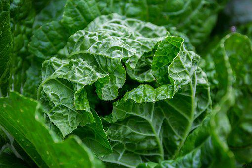 Vegetables, Plant, Green, Grow, Growth, Food, Healthy