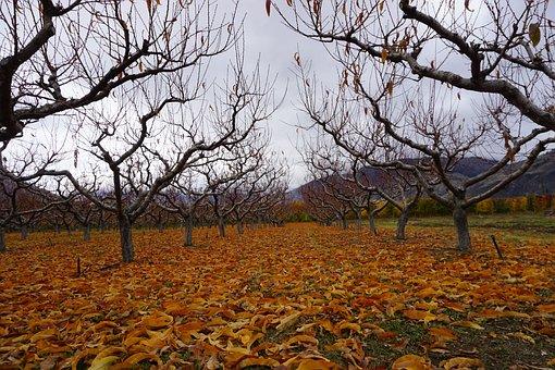 Wine, Wine Making, Osoyoos, Vineyard, Grapes
