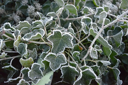 Winter, Freezing, Frozen, Nature, Crystals