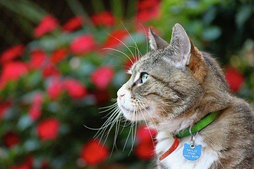 Cat, Garden, Animal, Pet, Feline, Nature, Cute, Head
