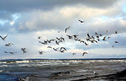 Gulls, Swarm, Beach, Sea, Clouds, Baltic Sea, Wind