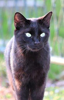 Black Cat, Green Eyes, Pet, Cute, Domestic, Nature