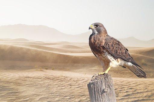 Desert, Bird, Raptor, Nature, Bird Of Prey, Animal