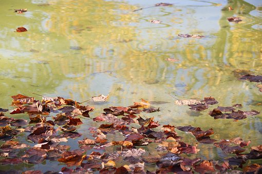 Leaves, Fall, Fountain, Park, Darcy, Dijon, Water