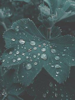 Garden, Leaf, Nature, Green, Plant, Leaves, Spring