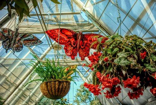 Butterflies, Flowers, Nature, Hanging Baskets